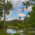 Lowcountry Marsh by Dale Powell