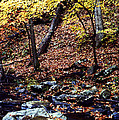 South Branch Quantico Creek by Thomas R Fletcher