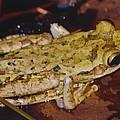 Tree Frog by Robert Floyd