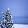140303a-12 Winter Blues by Albert Seger