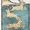 1491 Sea Hares From Hortus Sanitatis by Paul D Stewart