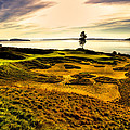 #15 At Chambers Bay Golf Course  by David Patterson