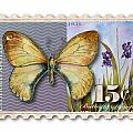 15 Cent Butterfly Stamp by Amy Kirkpatrick