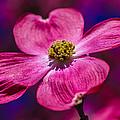 Flower by Gerald Kloss