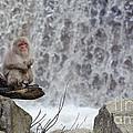 Snow Monkeys by John Shaw