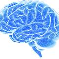 Brain by Pasieka
