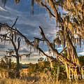 Winter Marsh by Dale Powell