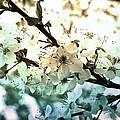 Spring by Lali Kacharava