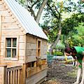 A Backyard Chicken Coop In Austin by Michael Hanson