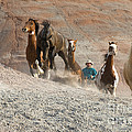 Cowboy by John Shaw