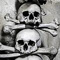 Human Bones. by Fernando Barozza
