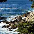 17 Mile Drive Detail by Barbara Snyder