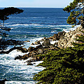17 Mile Drive Iv by Barbara Snyder
