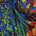 Peacock by Willson Lau