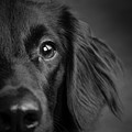 Portrait Of A Mixed Dog by Animal Images