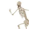 Running Skeleton by Sciepro/science Photo Library