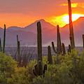 Usa, Arizona, Saguaro National Park by Jaynes Gallery