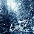 1900 Cyanotype New England Woods by Historic Image