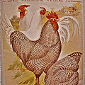 1909 California State Fair Poster by Bill Owen
