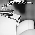 1931 Lincoln K Hood Ornament -1837bw by Jill Reger