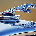 1948 Jaguar 2.5 Litre Drophead Coupe Hood Ornament by Jill Reger