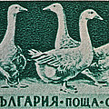 1955 Bulgarian Geese Stamp by Bill Owen