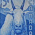 1956 Canada Mountain Goat Stamp by Bill Owen