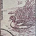 1960 Romanian Common Shelduck Stamp by Bill Owen