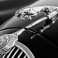 1964 Jaguar Mk2 Saloon Hood Ornament And Emblem by Jill Reger