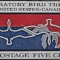 1966 Migratory Bird Treaty Stamp by Bill Owen