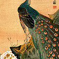 19th C. Japanese Peacock by Historic Image
