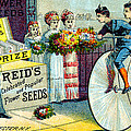 19th C. Reid's Flower Seeds by Historic Image