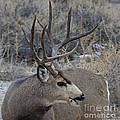 4x4 Mule Deer Buck by J L Woody Wooden