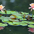 A Day At The Lily Pond by Suzanne Gaff