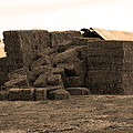 A Needle In A Haystack by Barbara Snyder