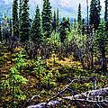 Alaska Mountain Range Wilderness by Thomas R Fletcher