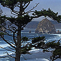 Along The Oregon Coast by Tom Janca