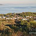 Alonissos Island by David Fowler