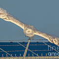 Amazing Wingspan by Cheryl Baxter