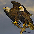 American Bald Eagle Pair  by Larry Linton