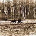 Amish Buggy And Corn Crib by David Arment