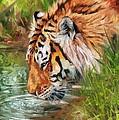 Amur Tiger by David Stribbling