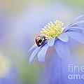 Anemone Lady by Jacky Parker