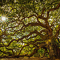 Angel Oak by Serge Skiba