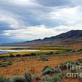 Antelope Island by Jemmy Archer