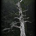 Anthropomorphic Tree by John Stephens