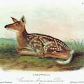 Audubon Deer by Granger