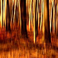 Autumn Colors by Heike Hultsch