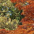 autumn colours in Bavaria by Rudi Prott