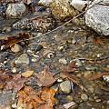 Autumn Creek by Peter Lakomy